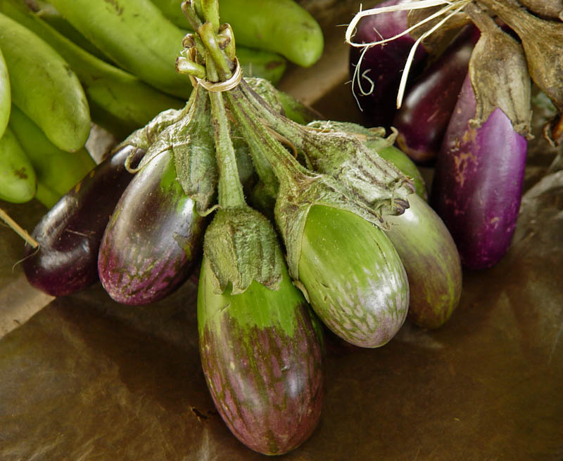 Eggplants good for grilling and making into jeow