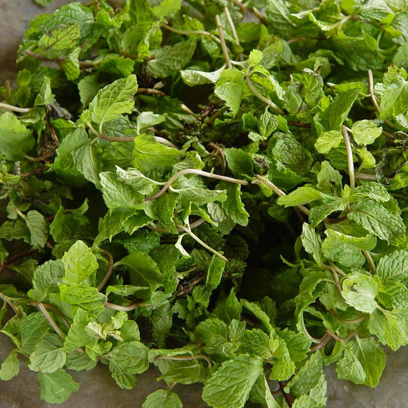 Small leafed mint ຜັກຫອມລາບມົນ pak hom lahp mon