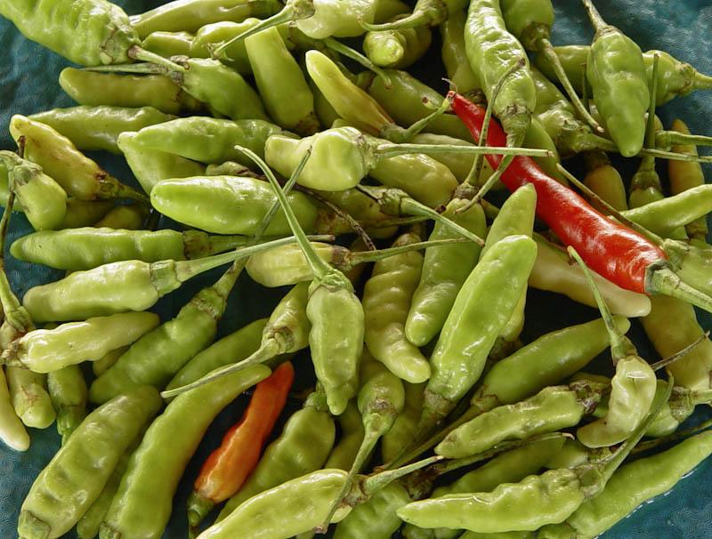 Hot chillies ໝາກເຜັດ mak pet