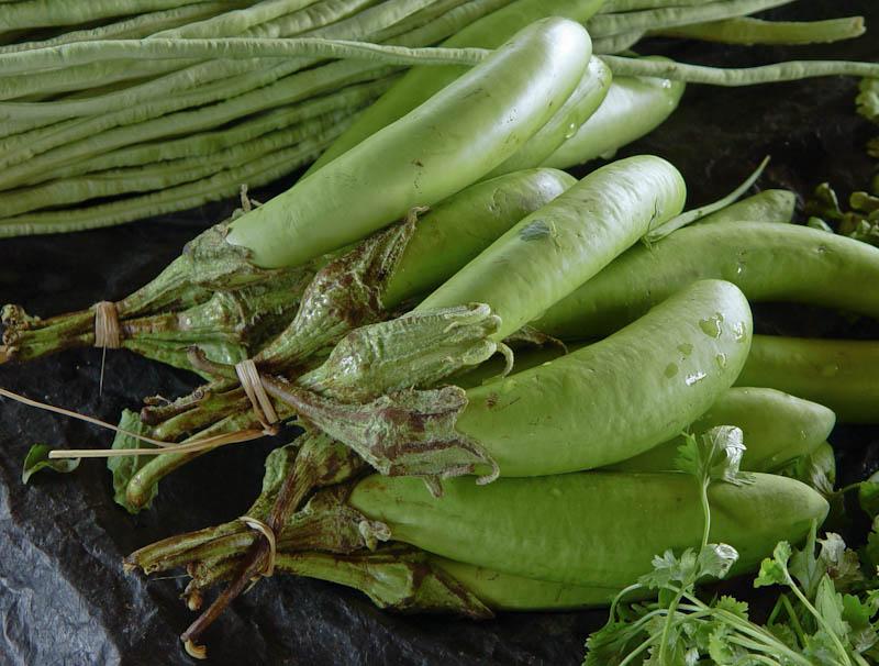 Long eggplant, long aubergine ໝາກເຂືອຍາວ mak keua nyaow
