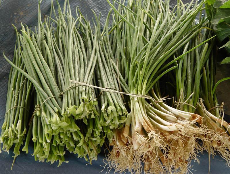 Spring onion greens, scallion greens ຜັກບົວໃບ pak bua bai Spring onions, with bulb ຫົວ ຜັກບົວໃບ houa pak bua bai