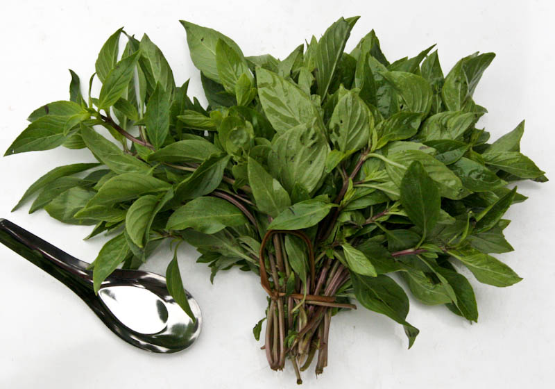 Sweet basil, Thai or sweet basil, Asian Ocimum basilicum ຜັກບົວລະພາ pak boualapha, pak boula phe