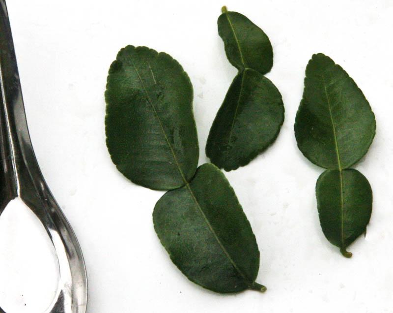 Kaffir lime leaves ໃບຂີ້ຫູດ bai ke hoot