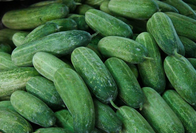 Cucumber ໝາກແຕງ mak taeng