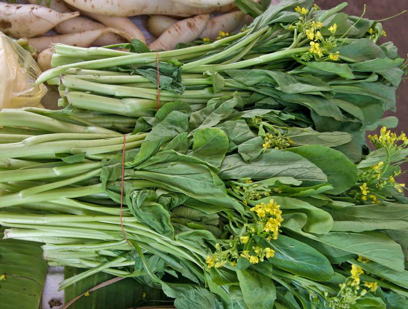 Chinese flowering cabbage ຜັກກາດຊອມ pak kaat som, pak kaat kiao