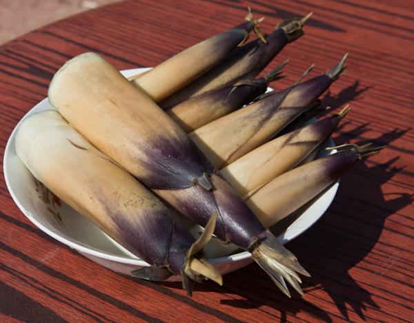 Bitter bamboo shoots